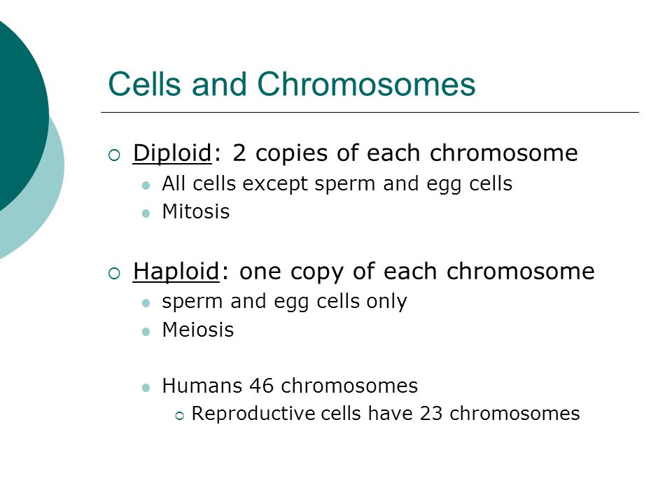 Cells and Chromosomes  Diploid: 2 copies of each chromosome All cells except sperm and egg cells Mitosis  Haploid: one copy of each chromosome sperm
