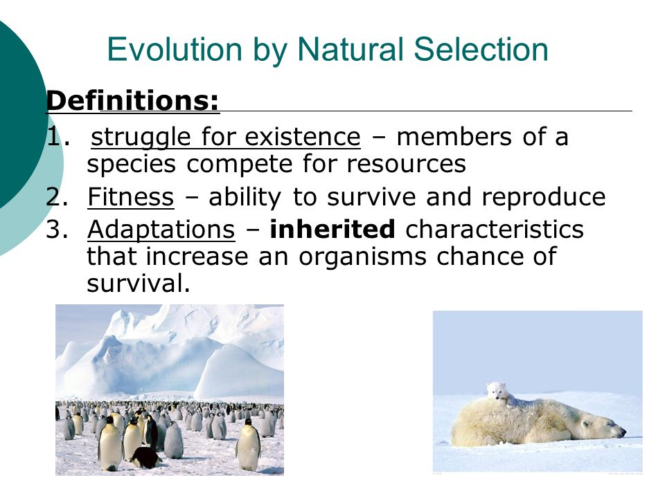 Evolution by Natural Selection Definitions: 1. struggle for existence – members of a species compete for resources 2. Fitness – ability to survive and