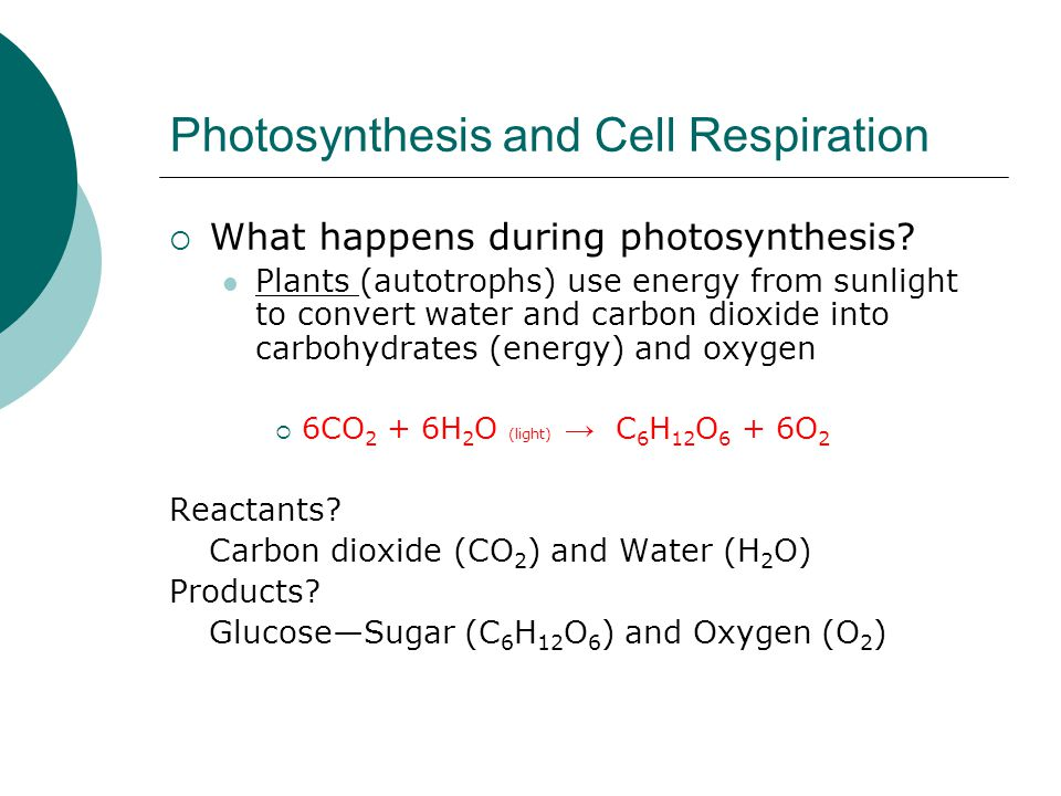 Photosynthesis and Cell Respiration  What happens during photosynthesis? Plants (autotrophs) use energy from sunlight to convert water and carbon dio