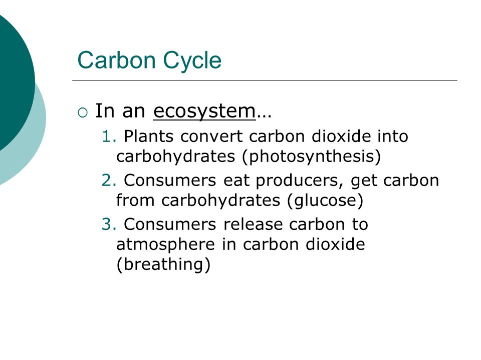 Carbon Cycle  In an ecosystem… 1. Plants convert carbon dioxide into carbohydrates (photosynthesis) 2. Consumers eat producers, get carbon from carbo