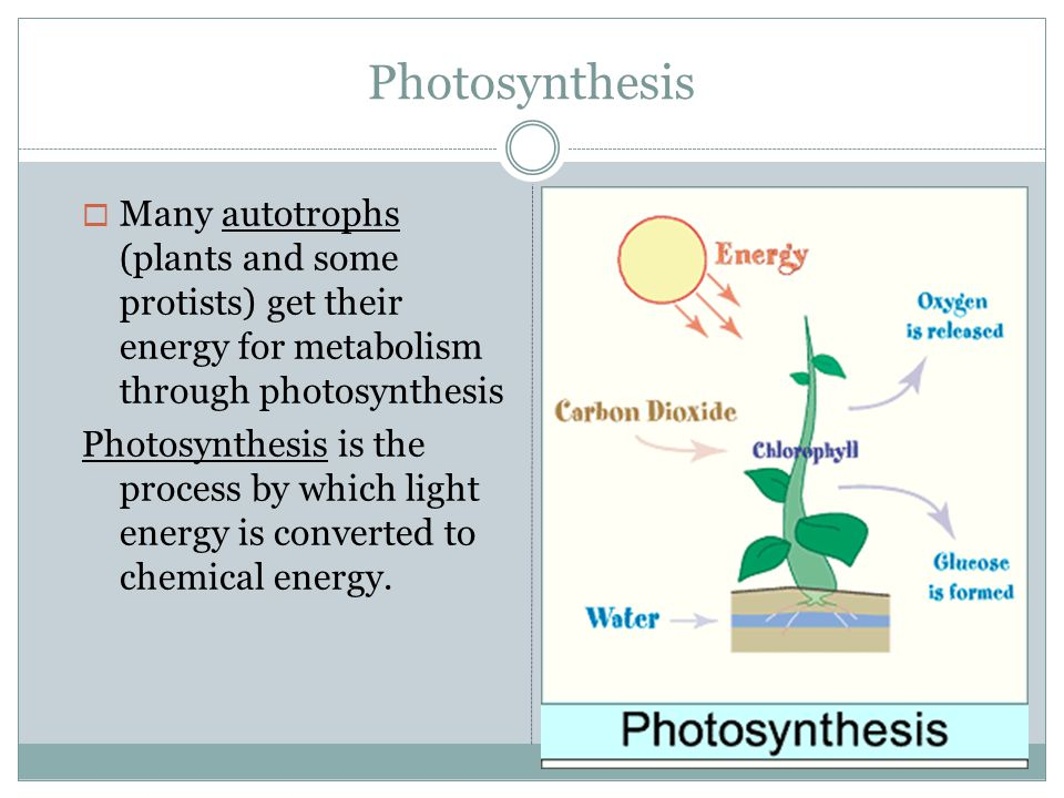 ATP Energy flows throughout the living world and is temporarily stored in organisms as ATP ATP can even be called energy currency as energy from ATP powers metabolism