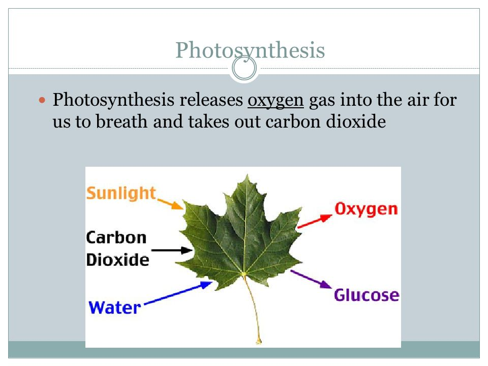 Photosynthesis Eq: carbon dioxide + water carbohydrates (sugars) + oxygen Eq: CO 2 + H 2 O  C 6 H 12 O 6 (glucose) +O 2 Light energy