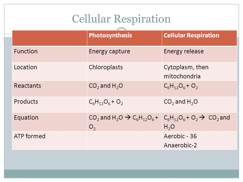 Cellular Respiration Photosynthesis produces oxygen, while Cellular Respiration produces carbon dioxide Comparing photosynthesis and cellular respirat