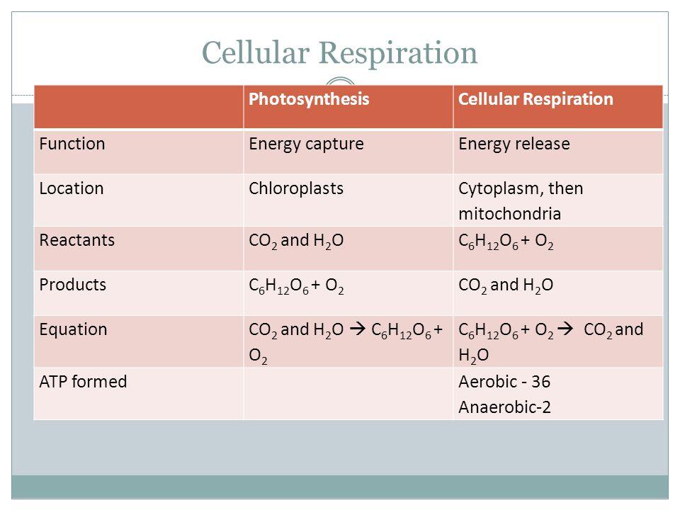 Cellular Respiration Photosynthesis produces oxygen, while Cellular Respiration produces carbon dioxide Comparing photosynthesis and cellular respiration: