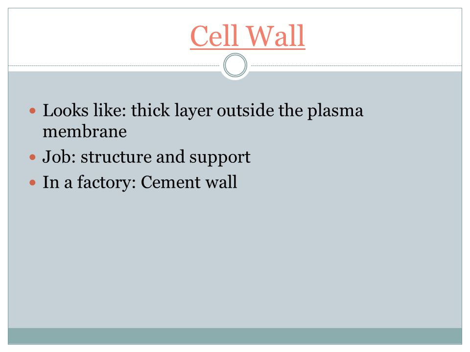 Plasma Membrane Looks like: layered membrane (called a lipid bilayer) surrounding the cell but inside of the cell wall Job: the regulator -controls what comes in and out of the cell, protects, and supports the cell In a factory: security guards