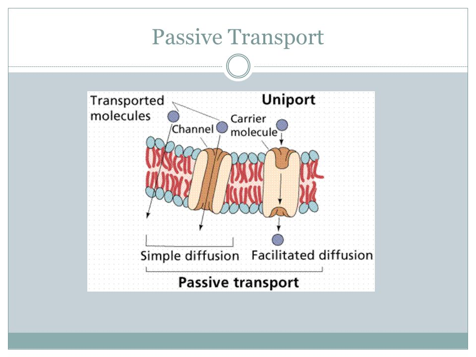 Passive Transport Facilitated diffusion is the diffusion of substances across a membrane that requires the help of protein channels Facilitated diffusion, just like regular diffusion, does not need energy