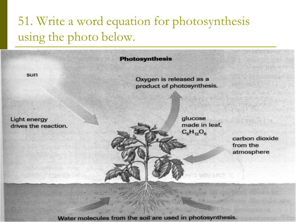 51. Write a word equation for photosynthesis using the photo below.