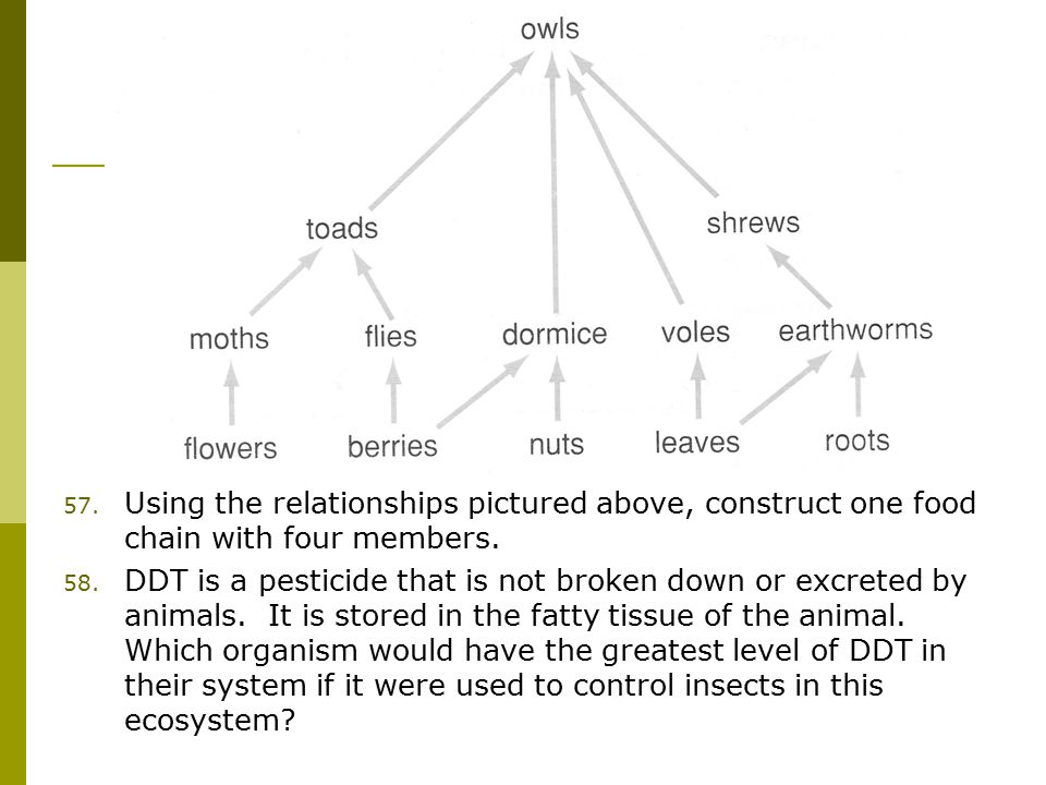 57. Using the relationships pictured above, construct one food chain with four members.