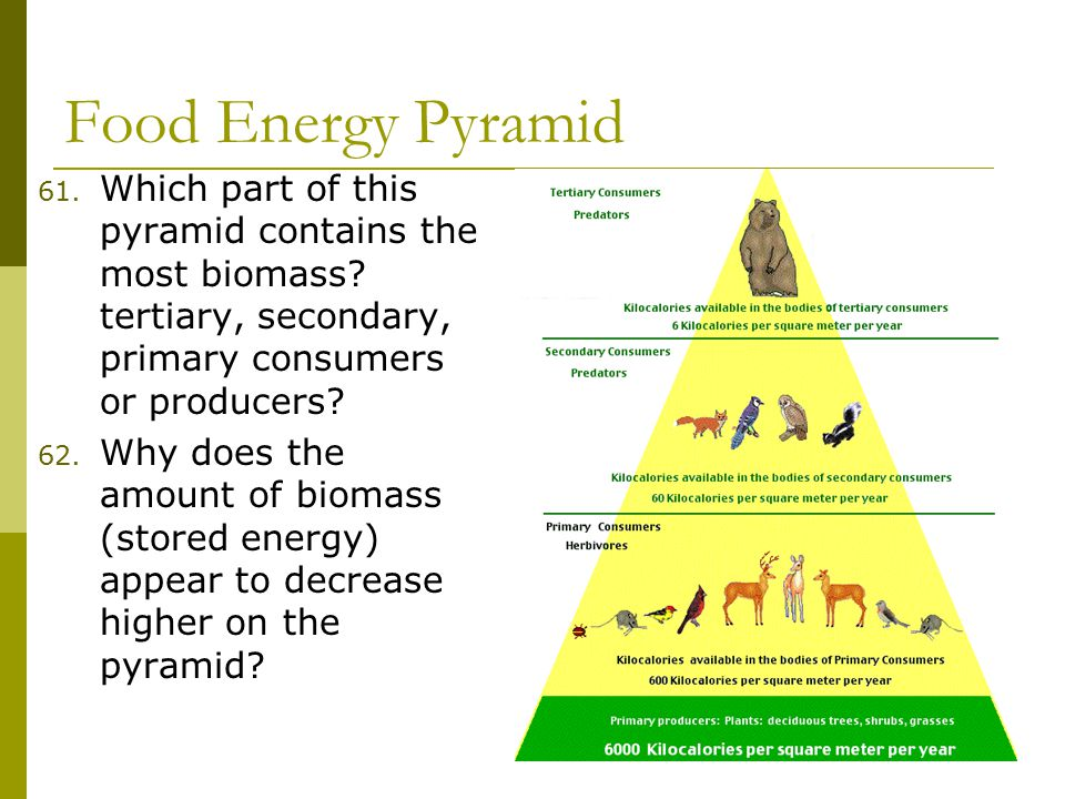 Food Energy Pyramid 61. Which part of this pyramid contains the most biomass.