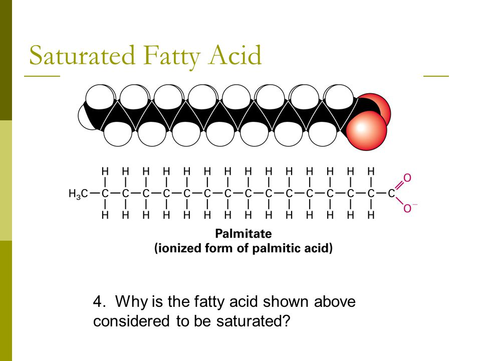 Saturated Fatty Acid 4. Why is the fatty acid shown above considered to be saturated
