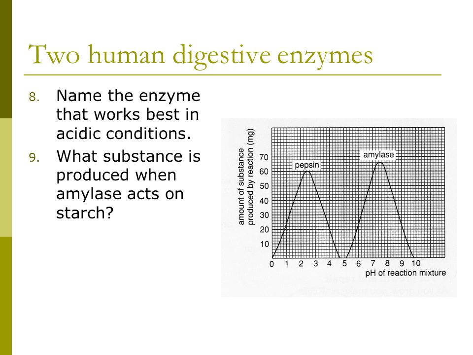 Two human digestive enzymes 8. Name the enzyme that works best in acidic conditions.