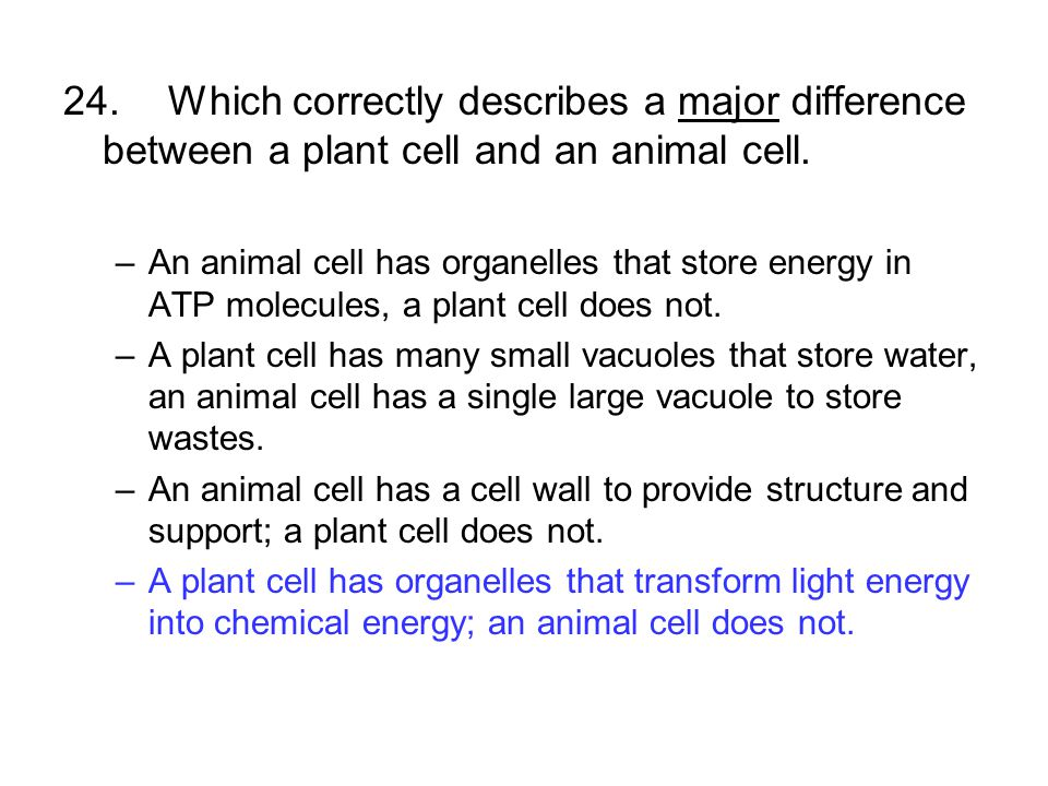 24.Which correctly describes a major difference between a plant cell and an animal cell. –An animal cell has organelles that store energy in ATP molec