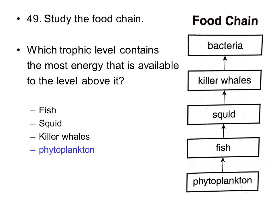 49.Study the food chain. Which trophic level contains the most energy that is available to the level above it? –Fish –Squid –Killer whales –phytoplank