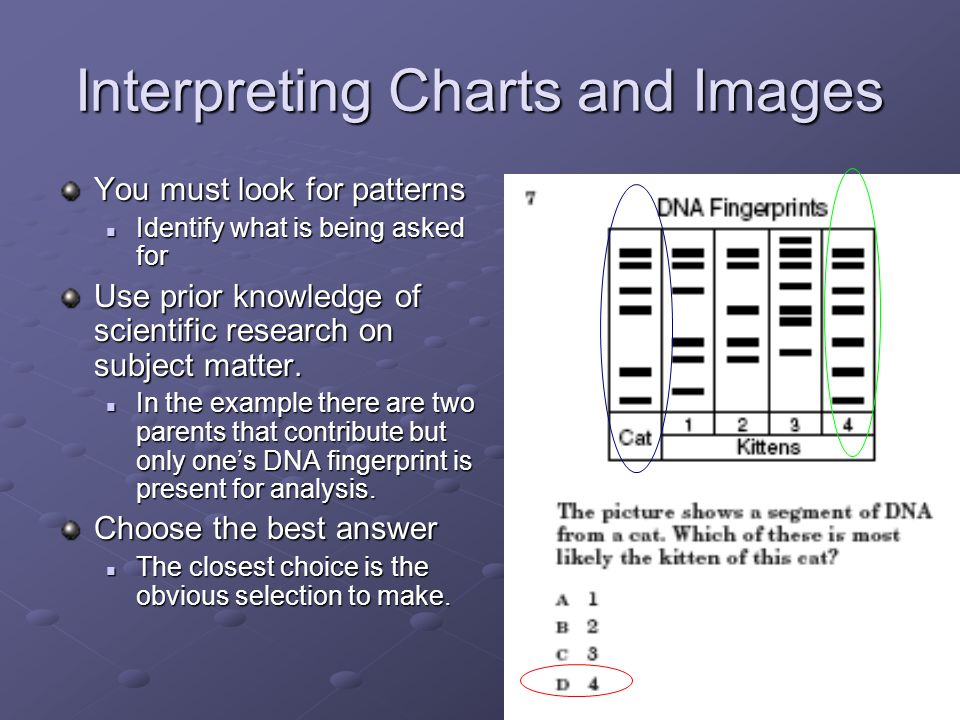 Interpreting Charts and Images You must look for patterns Identify what is being asked for Identify what is being asked for Use prior knowledge of scientific research on subject matter.