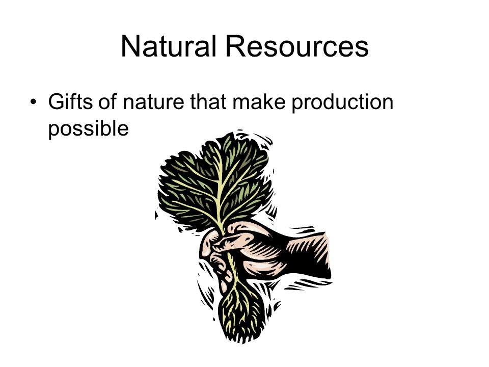 Natural Resources Gifts of nature that make production possible