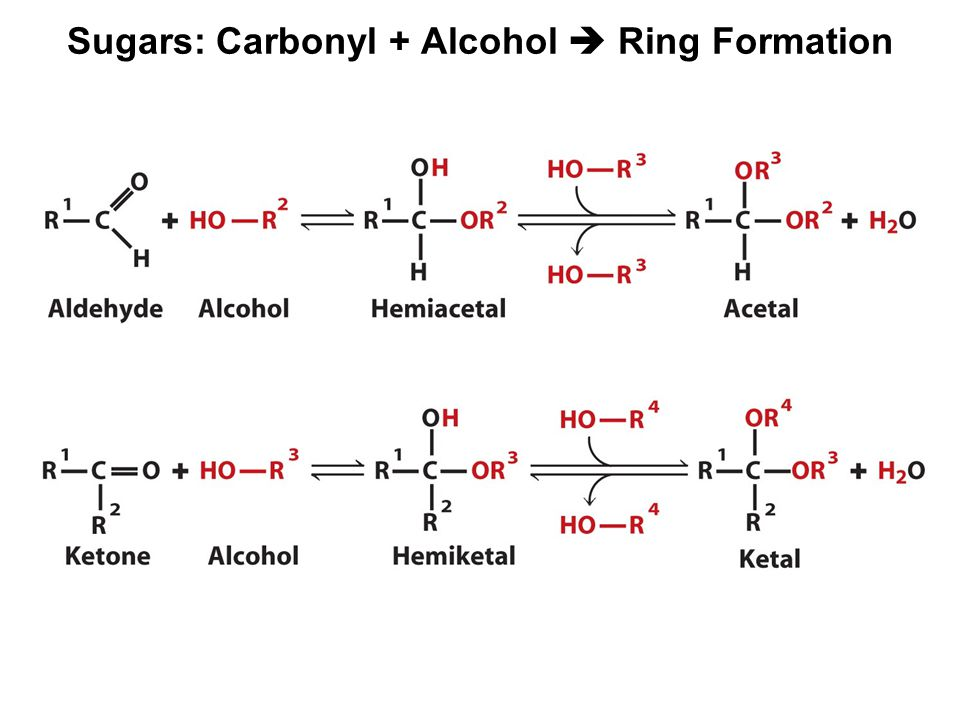 Sugars: Carbonyl + Alcohol  Ring Formation