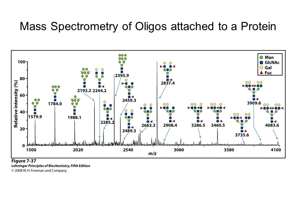 Mass Spectrometry of Oligos attached to a Protein