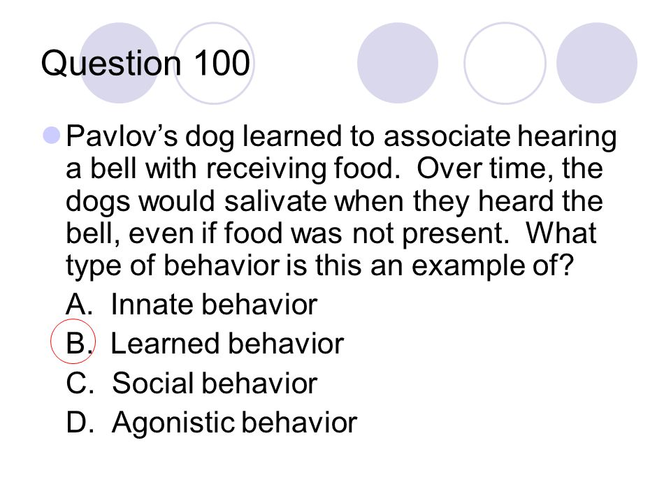 Question 100 Pavlov's dog learned to associate hearing a bell with receiving food. Over time, the dogs would salivate when they heard the bell, even i