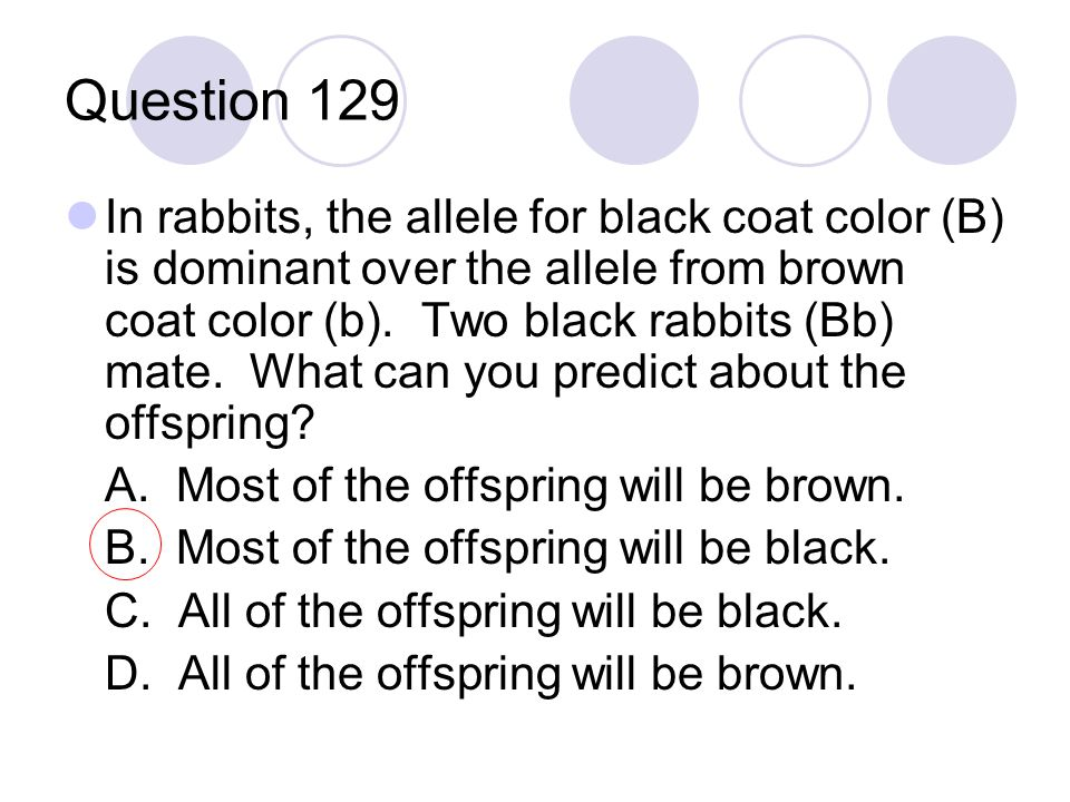 Question 129 In rabbits, the allele for black coat color (B) is dominant over the allele from brown coat color (b). Two black rabbits (Bb) mate. What