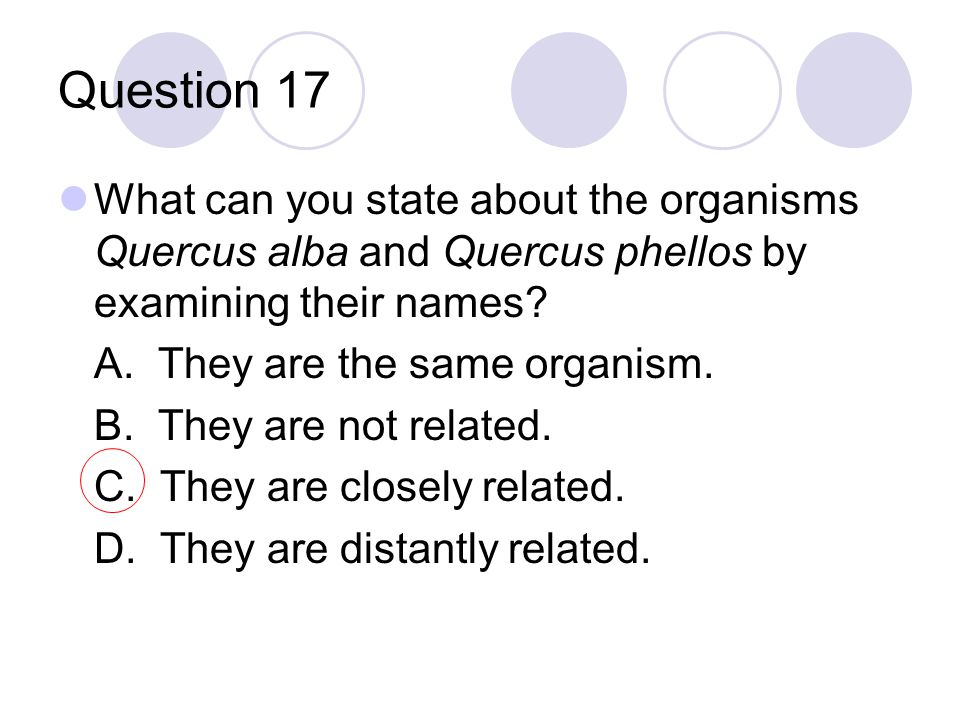 Question 17 What can you state about the organisms Quercus alba and Quercus phellos by examining their names? A. They are the same organism. B. They a