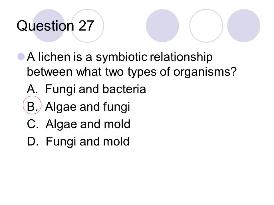 Question 27 A lichen is a symbiotic relationship between what two types of organisms? A. Fungi and bacteria B. Algae and fungi C. Algae and mold D. Fu