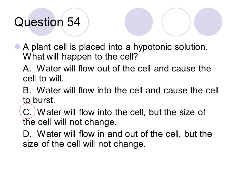 Question 54 A plant cell is placed into a hypotonic solution. What will happen to the cell? A. Water will flow out of the cell and cause the cell to w