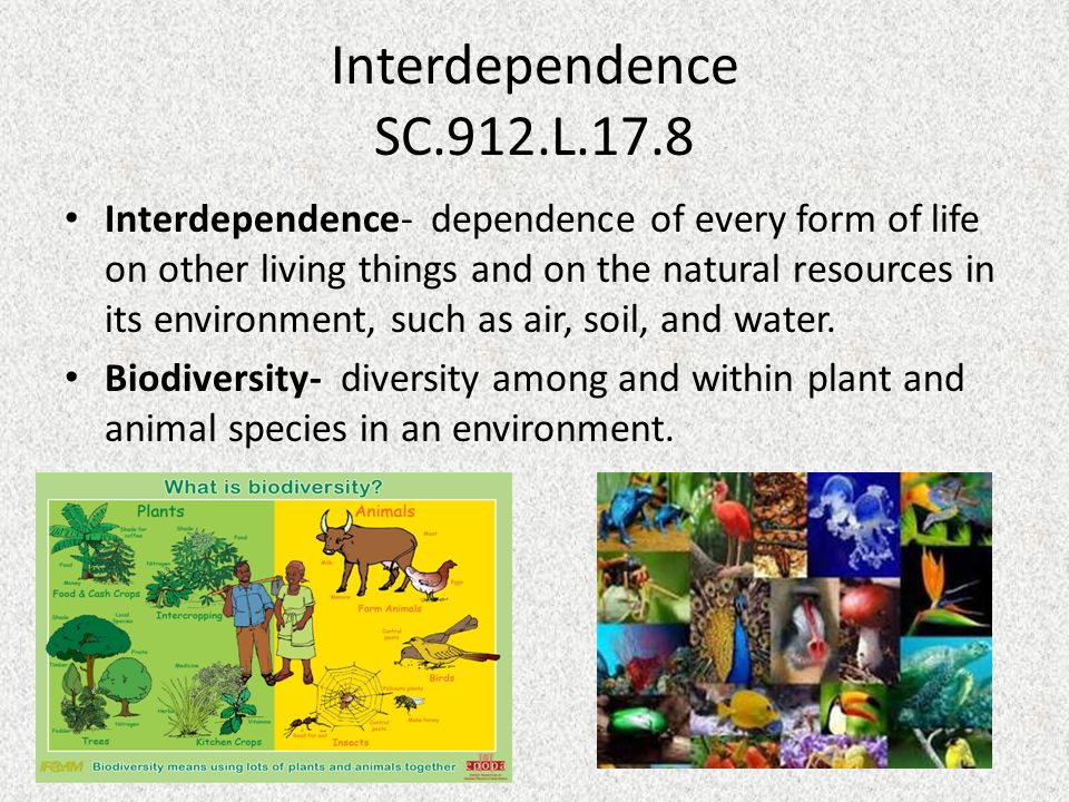 Interdependence SC.912.L.17.8 Interdependence- dependence of every form of life on other living things and on the natural resources in its environment, such as air, soil, and water.