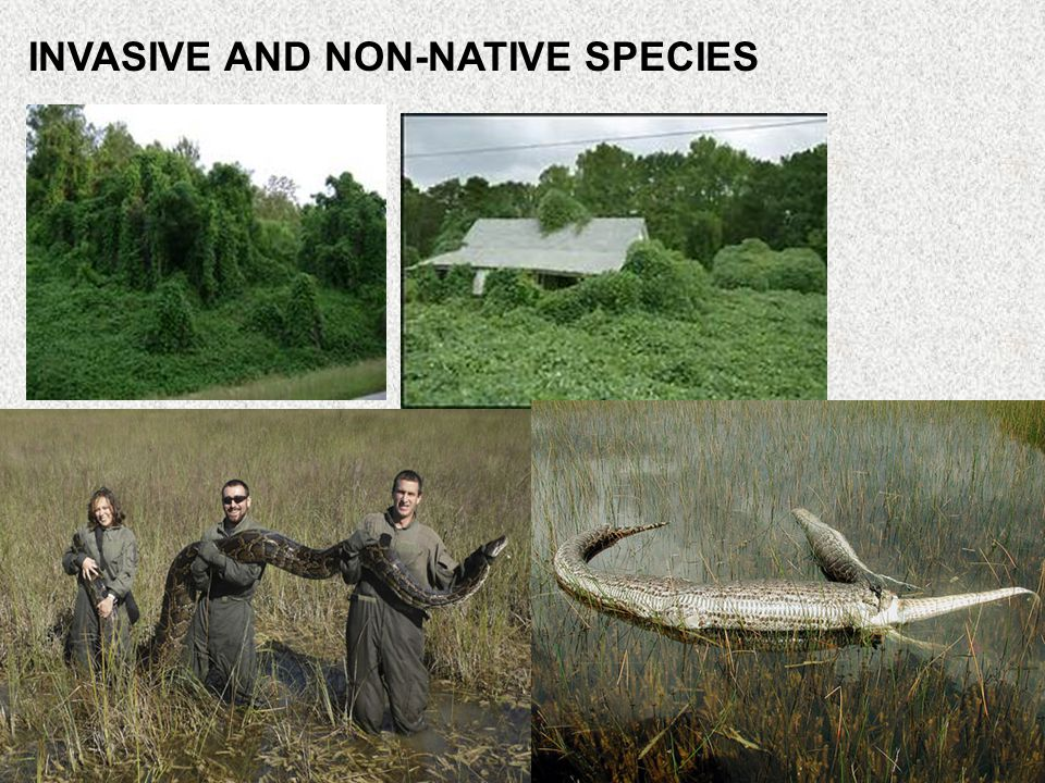 INVASIVE AND NON-NATIVE SPECIES