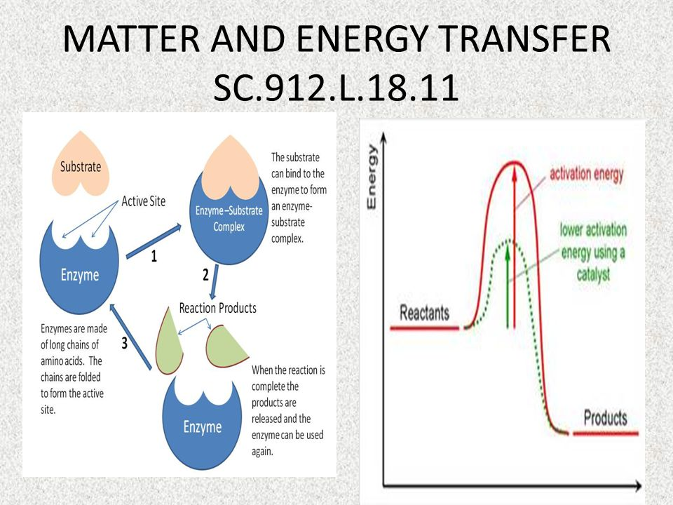 MATTER AND ENERGY TRANSFER SC.912.L.18.11
