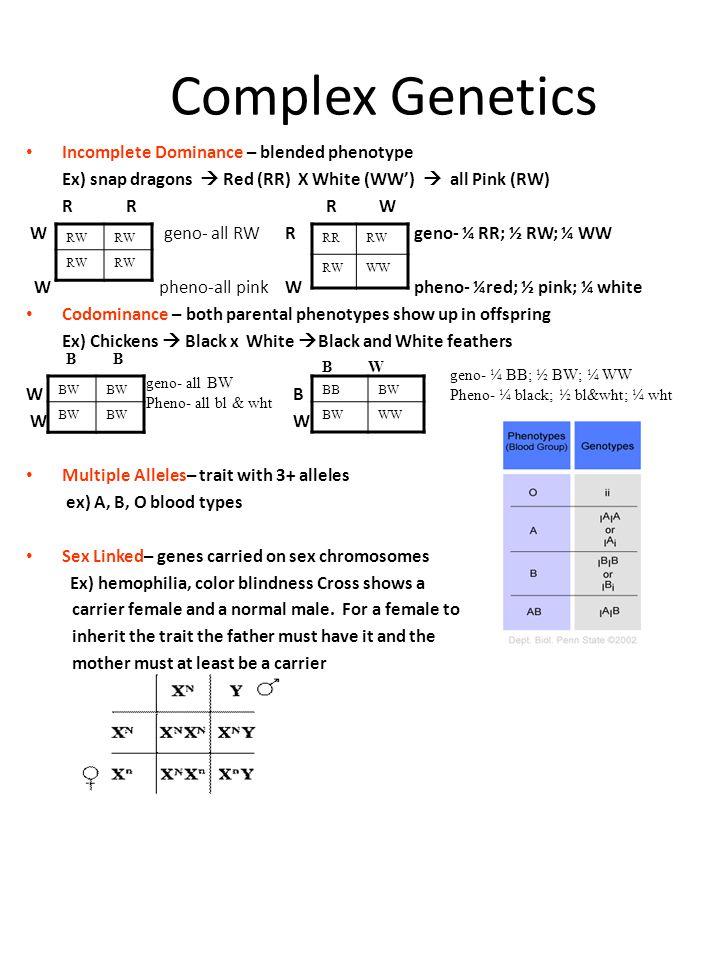 Complex Genetics Incomplete Dominance – blended phenotype Ex) snap dragons  Red (RR) X White (WW')  all Pink (RW) R R R W W geno- all RW R geno- ¼ R