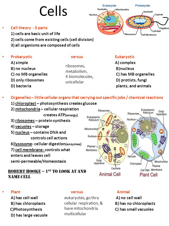 Cells Cell theory - 3 parts 1) cells are basic unit of life 2) cells come from existing cells (cell division) 3) all organisms are composed of cells P