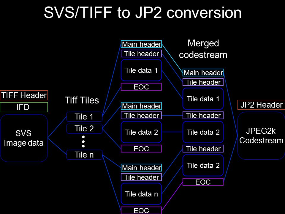 SVS/TIFF to JP2 conversion Tile 1 Tile n Tile 2 Tiff Tiles IFD SVS Image data TIFF Header Main header Tile header EOC Tile data 1 Main header Tile header EOC Tile data 2 Main header Tile header EOC Tile data n Main header Tile header EOC Tile data 1 Tile header Tile data 2 Tile header Tile data 2 JPEG2k Codestream JP2 Header Merged codestream