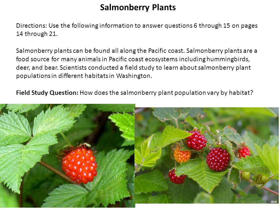 Salmonberry Plants Directions: Use the following information to answer questions 6 through 15 on pages 14 through 21.