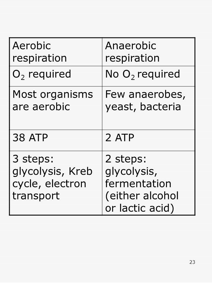 23 Aerobic respiration Anaerobic respiration O 2 requiredNo O 2 required Most organisms are aerobic Few anaerobes, yeast, bacteria 38 ATP2 ATP 3 steps: glycolysis, Kreb cycle, electron transport 2 steps: glycolysis, fermentation (either alcohol or lactic acid)