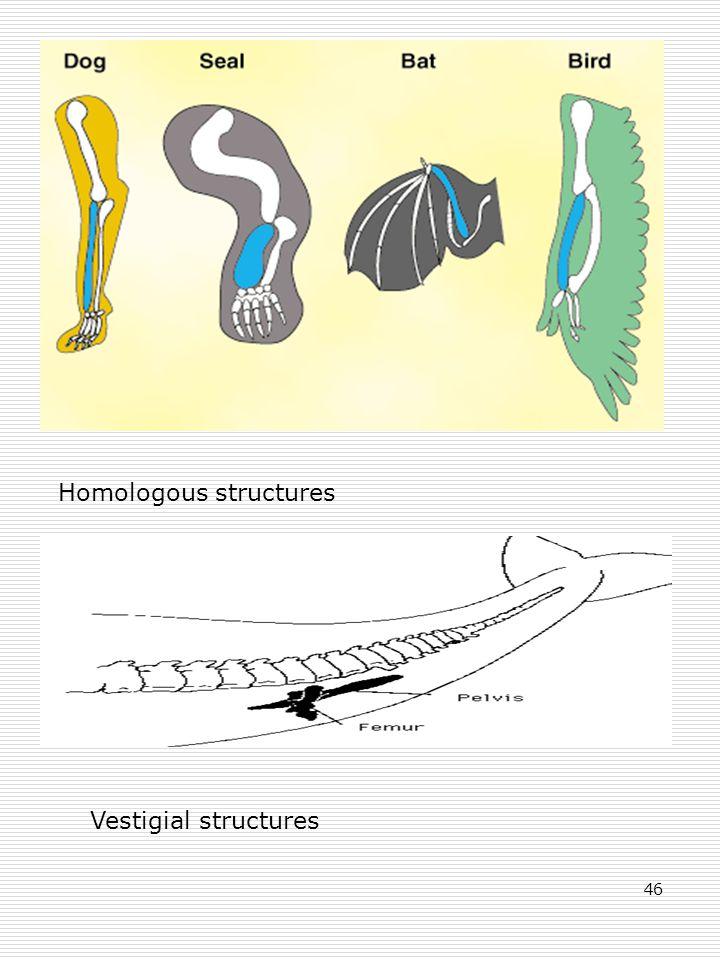 46 Homologous structures Vestigial structures