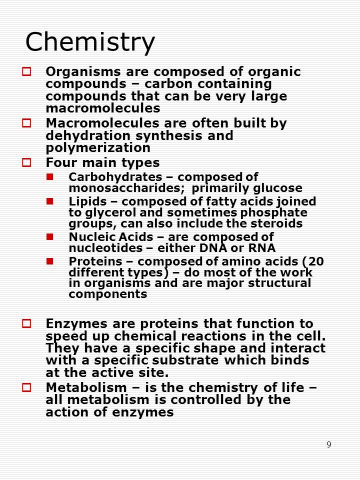 9 Chemistry  Organisms are composed of organic compounds – carbon containing compounds that can be very large macromolecules  Macromolecules are often built by dehydration synthesis and polymerization  Four main types Carbohydrates – composed of monosaccharides; primarily glucose Lipids – composed of fatty acids joined to glycerol and sometimes phosphate groups, can also include the steroids Nucleic Acids – are composed of nucleotides – either DNA or RNA Proteins – composed of amino acids (20 different types) – do most of the work in organisms and are major structural components  Enzymes are proteins that function to speed up chemical reactions in the cell.