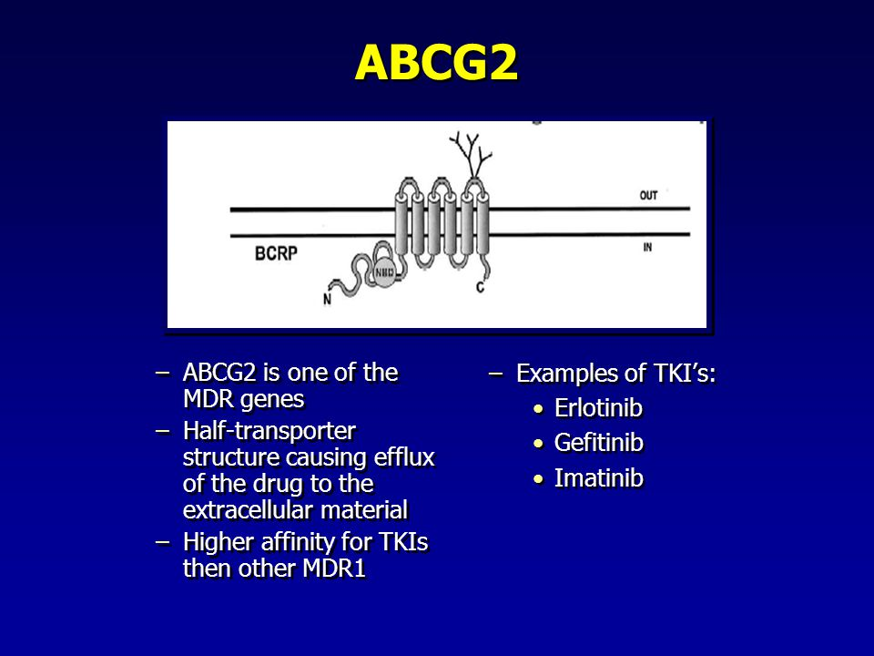 ABCG2 –ABCG2 is one of the MDR genes –Half-transporter structure causing efflux of the drug to the extracellular material –Higher affinity for TKIs th