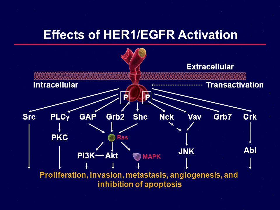 Effects of HER1/EGFR Activation Proliferation, invasion, metastasis, angiogenesis, and inhibition of apoptosis SrcPLC  GAPGrb2ShcNckVavGrb7Crk PKC Ra