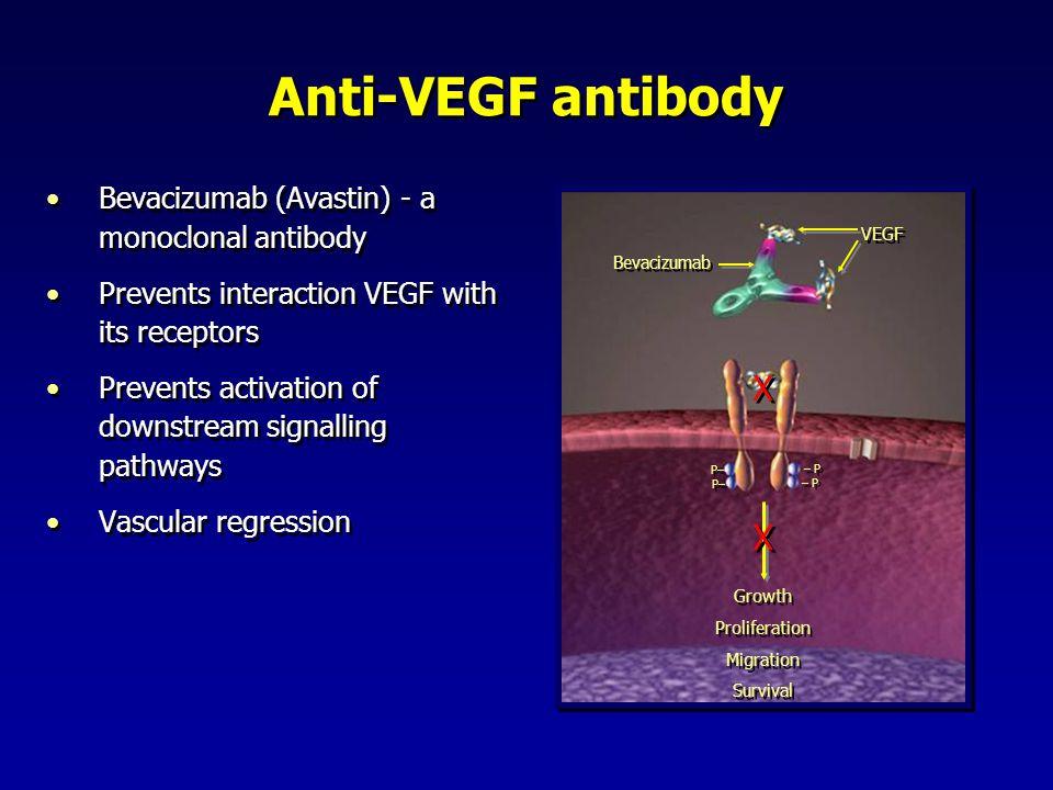 Anti-VEGF antibody Bevacizumab (Avastin) - a monoclonal antibody Prevents interaction VEGF with its receptors Prevents activation of downstream signal