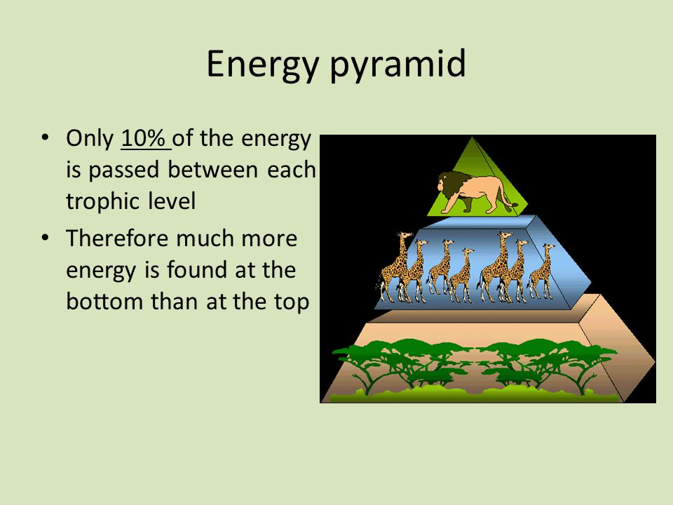 Energy pyramid Only 10% of the energy is passed between each trophic level Therefore much more energy is found at the bottom than at the top