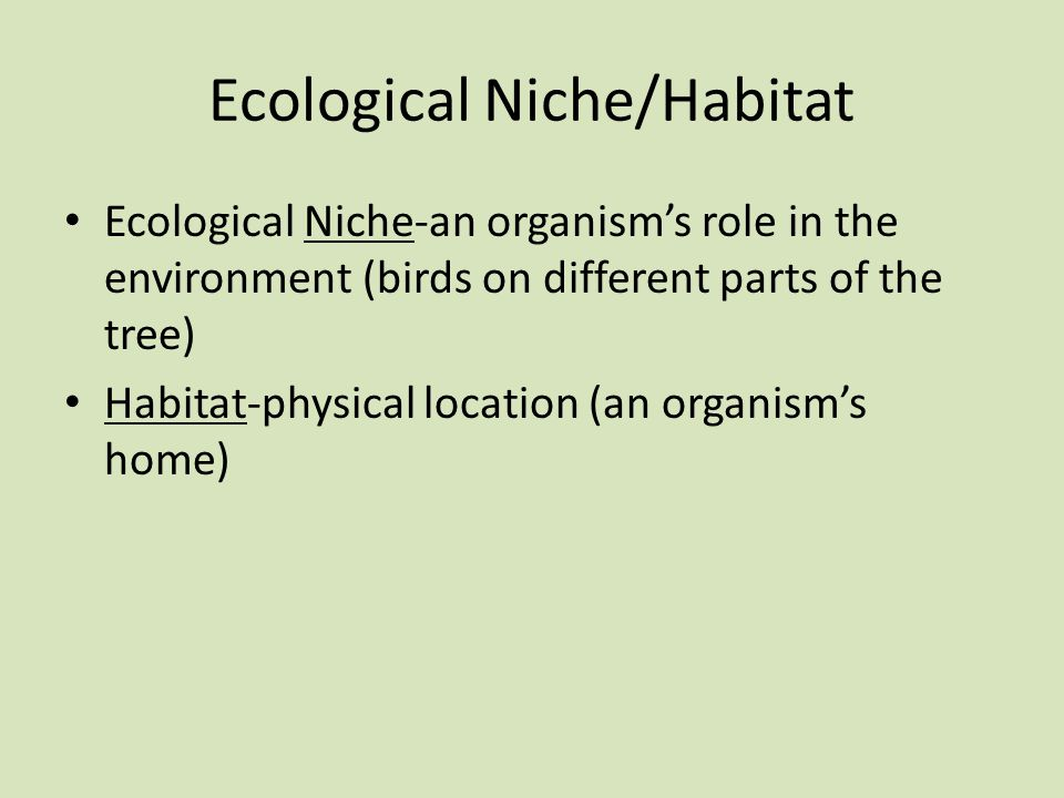 Ecological Niche/Habitat Ecological Niche-an organism's role in the environment (birds on different parts of the tree) Habitat-physical location (an organism's home)
