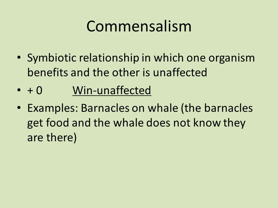 Commensalism Symbiotic relationship in which one organism benefits and the other is unaffected + 0Win-unaffected Examples: Barnacles on whale (the barnacles get food and the whale does not know they are there)
