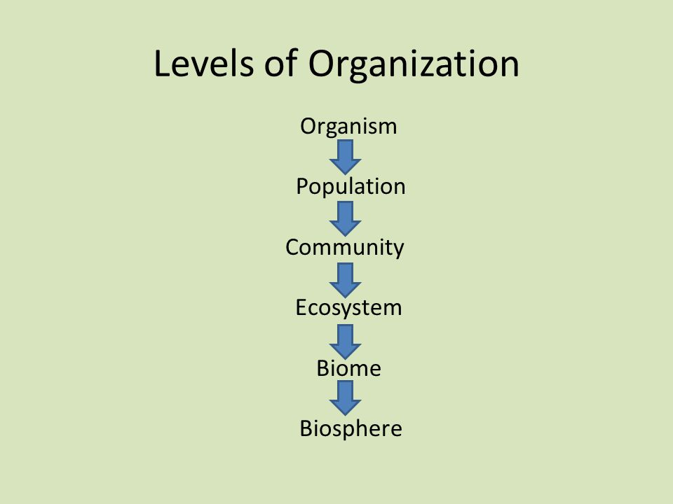 Levels of Organization Organism Population Community Ecosystem Biome Biosphere