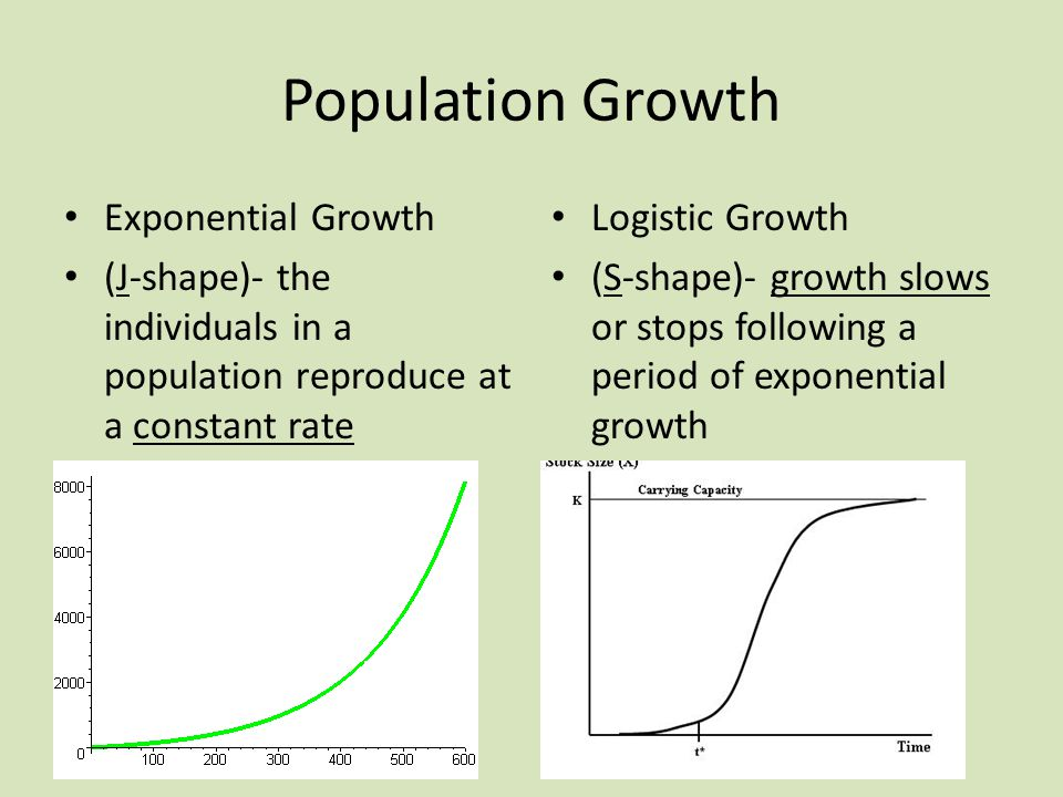 Population Growth Exponential Growth (J-shape)- the individuals in a population reproduce at a constant rate Logistic Growth (S-shape)- growth slows or stops following a period of exponential growth