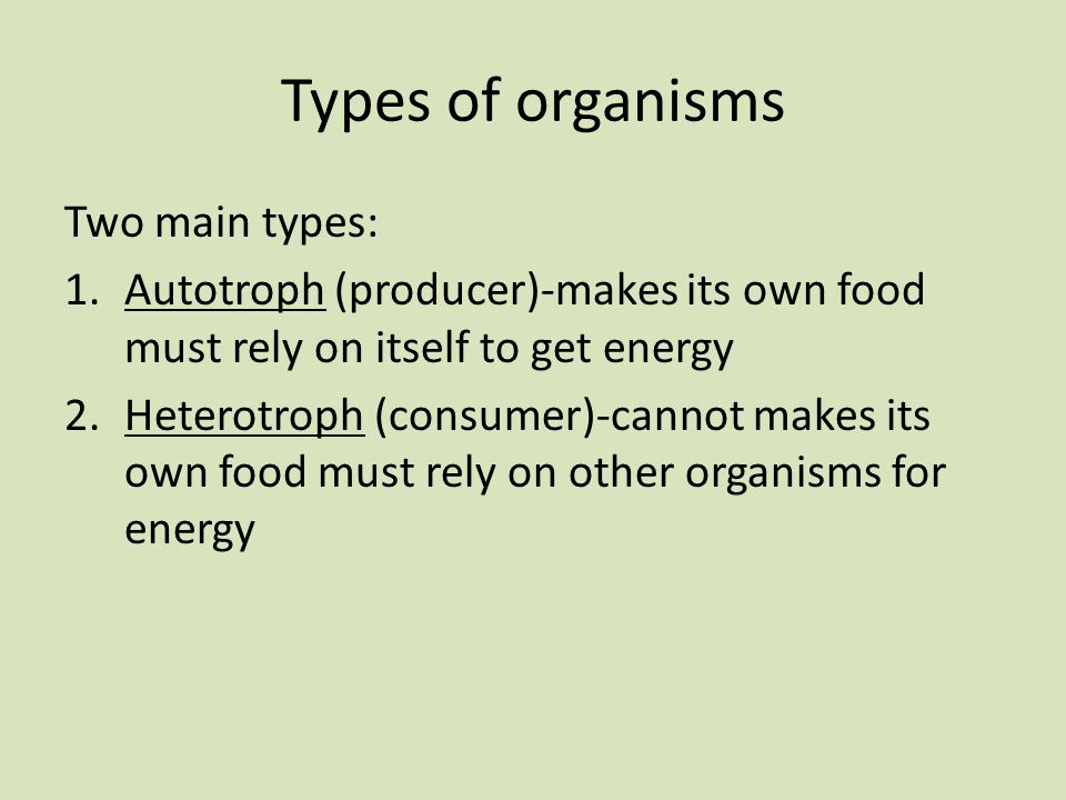 Types of organisms Two main types: 1.Autotroph (producer)-makes its own food must rely on itself to get energy 2.Heterotroph (consumer)-cannot makes its own food must rely on other organisms for energy