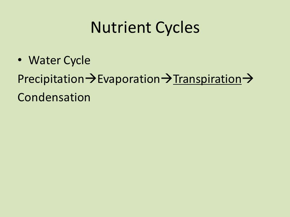 Nutrient Cycles Water Cycle Precipitation  Evaporation  Transpiration  Condensation