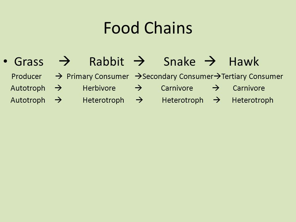 Food Chains Grass  Rabbit  Snake  Hawk Producer  Primary Consumer  Secondary Consumer  Tertiary Consumer Autotroph  Herbivore  Carnivore  Carnivore Autotroph  Heterotroph  Heterotroph  Heterotroph