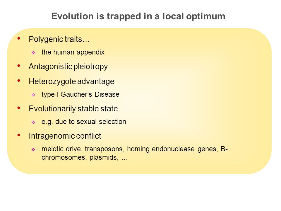 23 Evolution is trapped in a local optimum Polygenic traits…  the human appendix Antagonistic pleiotropy Heterozygote advantage  type I Gaucher's Disease Evolutionarily stable state  e.g.