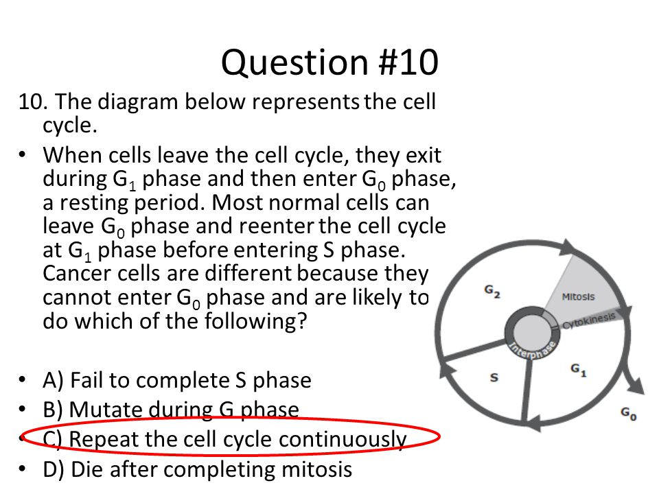Question #10 10. The diagram below represents the cell cycle. When cells leave the cell cycle, they exit during G 1 phase and then enter G 0 phase, a