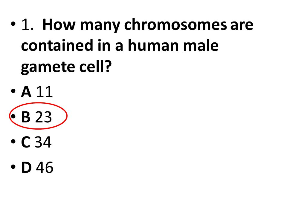 1. How many chromosomes are contained in a human male gamete cell? A 11 B 23 C 34 D 46